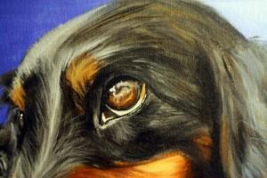 Mini Dachsund Pet Portrait ~ ElephantEats.com