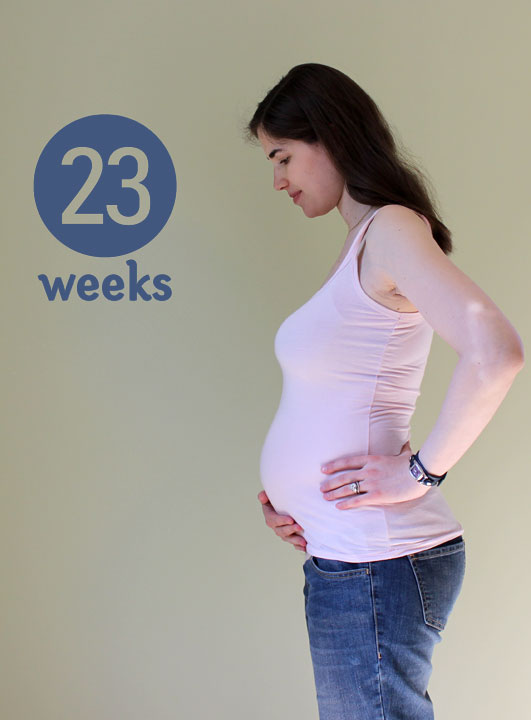 23 weeks ~ ElephantEats.com
