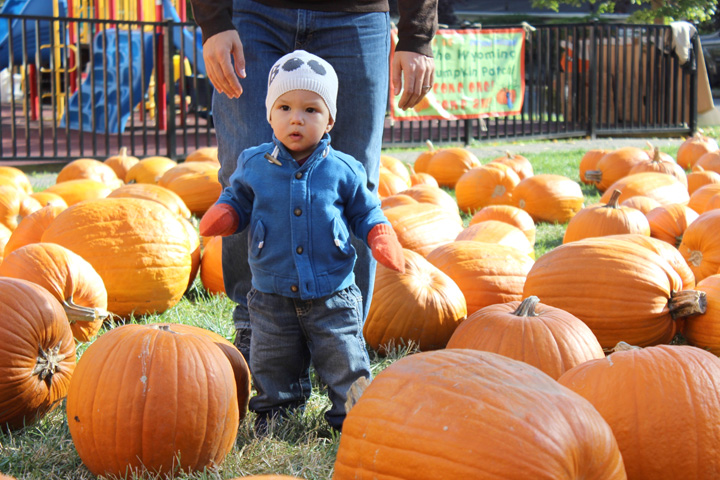 Pumpkin Picking 2016 3~ ElephantEats.com